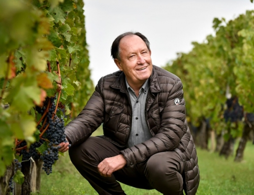 Treasury Wine Estates buys Chateau Cambon la Pelouse in Bordeaux